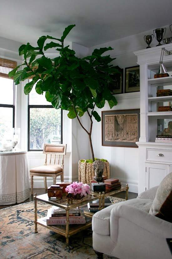 Украшение гостиной пальмой фото